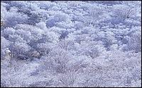 寬屏日本風景 1440*900 9 - [wall001.com]_widescreen_nature_wallpaper_IMG0040.jpg
